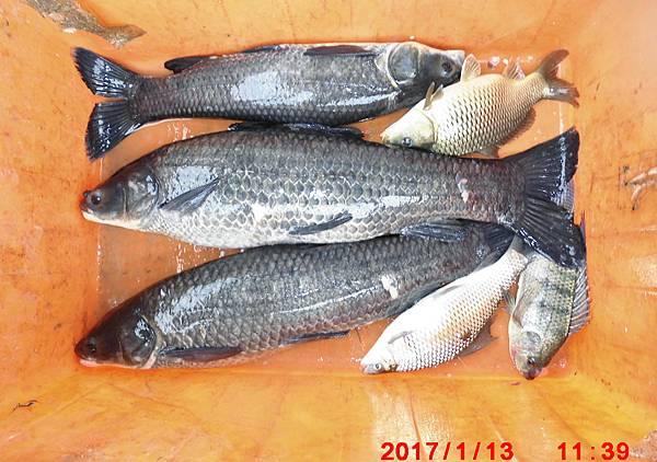 1060113-CIMG7606漁獲.jpg
