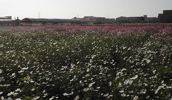 1060110花現龍井-DSCN4970.jpg