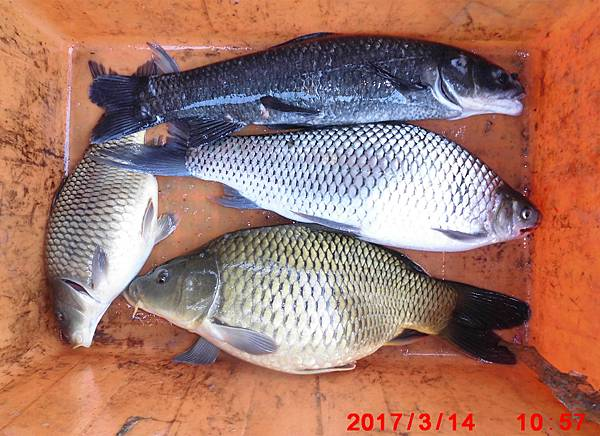 1.1060314-CIMG7644漁獲.jpg