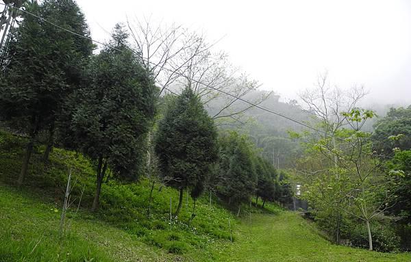 1060317桃李河畔-DSCN6124.jpg