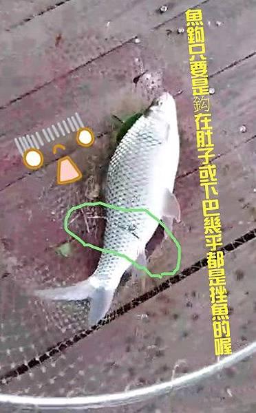 挫魚-1.jpg