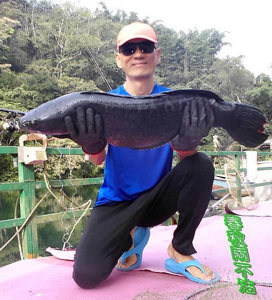 1100124-泰國鱧魚-04.jpg