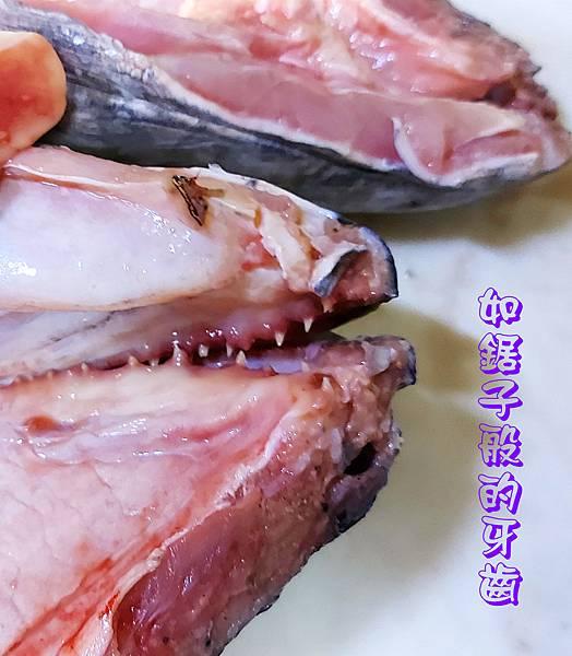1090909-大鱧魚(牙齒).jpg