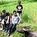 潘瑋柏和小朋友一起體驗放牛
