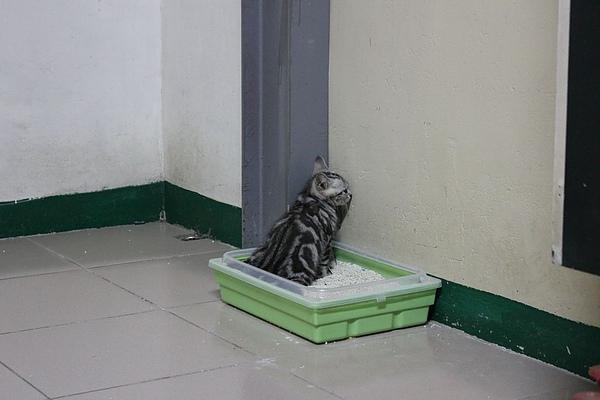 20100825貓砂盆