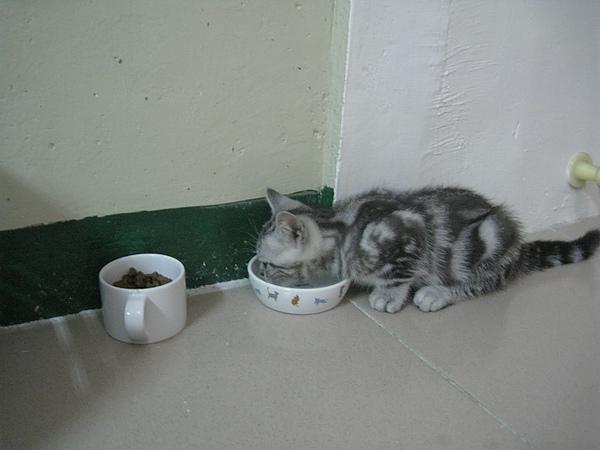 小翼在新家的第一餐
