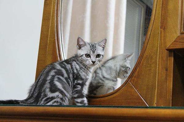 20100825鏡子內外