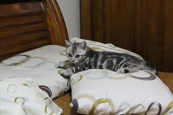 20100825上床卡位撲枕頭