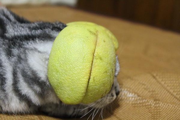 柚子帽的側拍圖