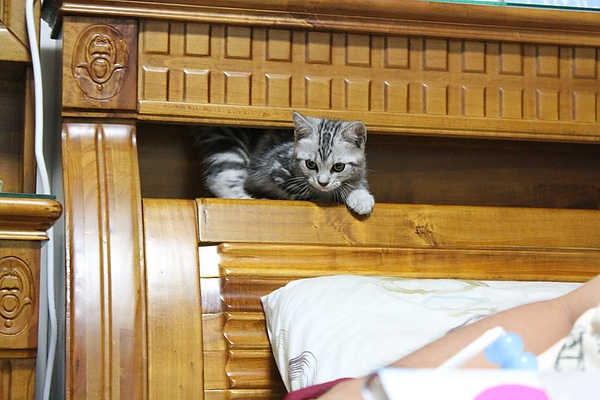 20100825這是床頭櫃中空空間