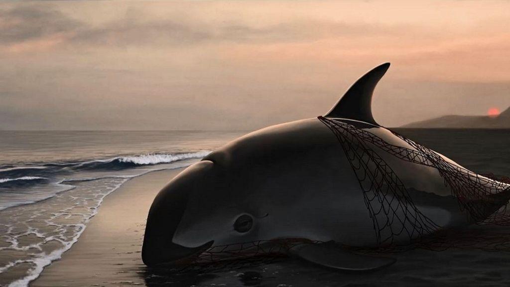 小海豚-1.jpg