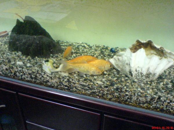 四條乖巧的魚