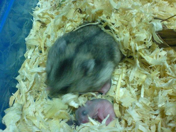 鼠麻麻+鼠寶寶
