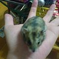 手上的鼠鼠