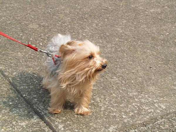 國父紀念館-可愛的狗狗