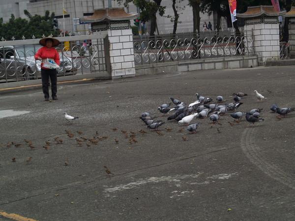 國父紀念館-鴿與麻雀