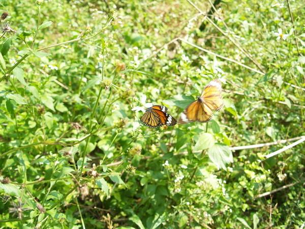 拍不到的蝴蝶
