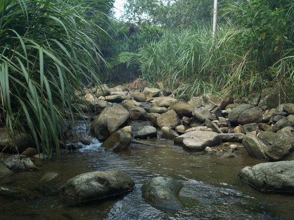 清澈的河水...差點踩到牛蛙