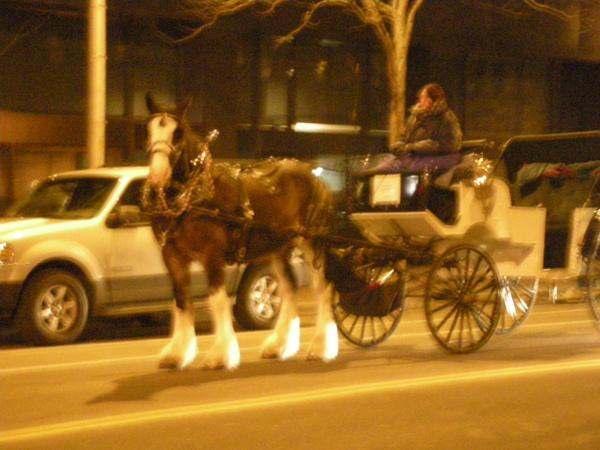 在Denver的最後一天晚上,用完晚餐走回飯店時,居然看到了馬車。
