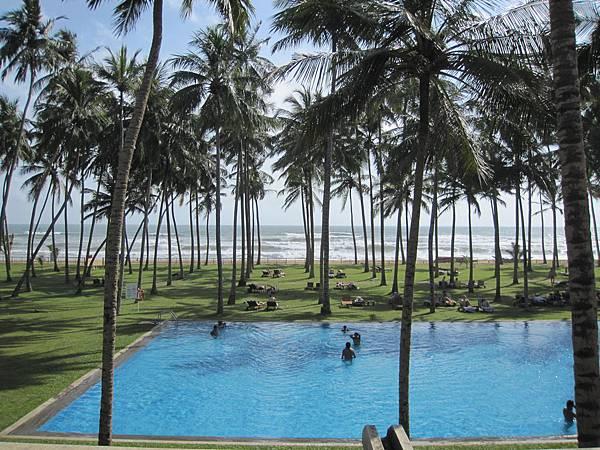 椰子樹與海