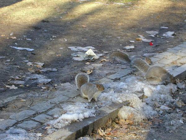 squirrel in Boston