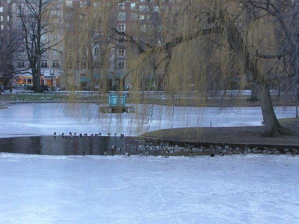 Boston Common,12/2003