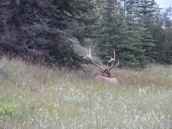 0817 elk