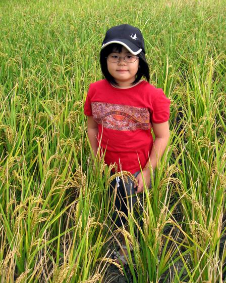 林小妹與稻米的之初相認