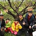 認養梨樹、掛牌