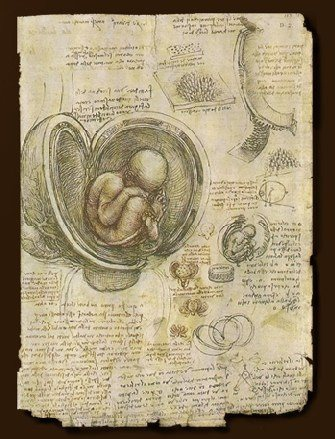 達文西-胚胎研究1510.jpg