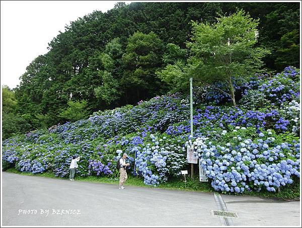 DSC07088_副本.jpg