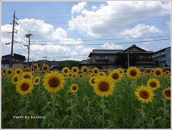 DSC09765_副本.jpg