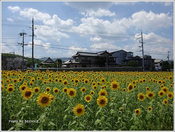 DSC09854_副本.jpg