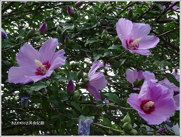 DSC09577_副本.jpg