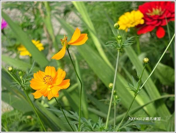 DSC00364_副本.jpg