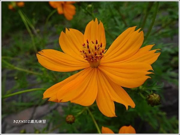 DSC01084_副本.jpg