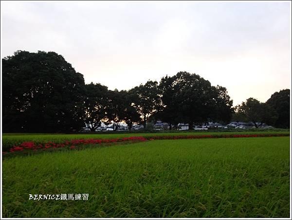 DSC01133_副本.jpg