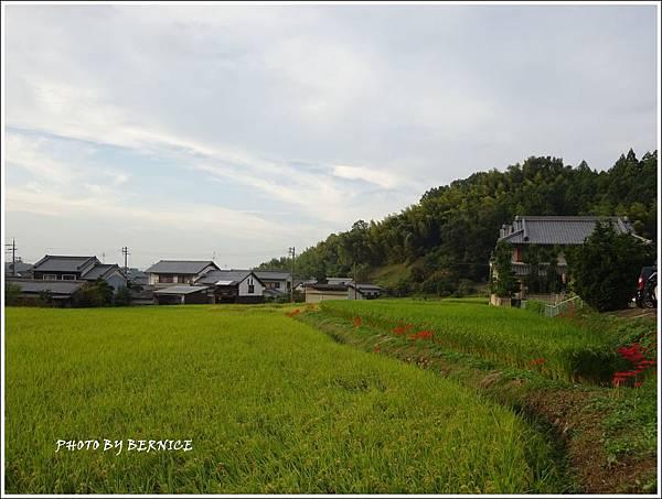 DSC01123_副本.jpg