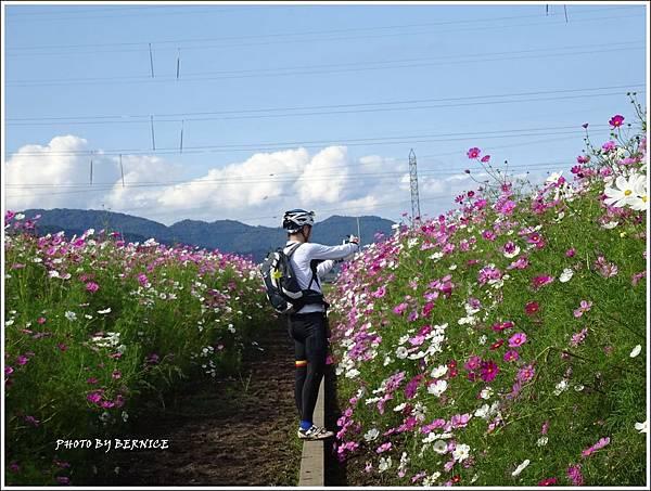 DSC01375_副本.jpg
