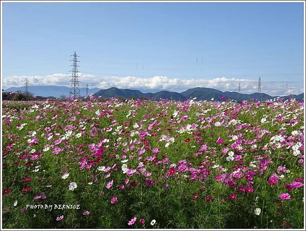 DSC01443_副本.jpg