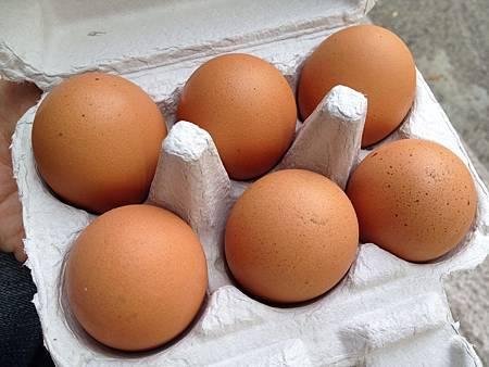 9m 雞蛋