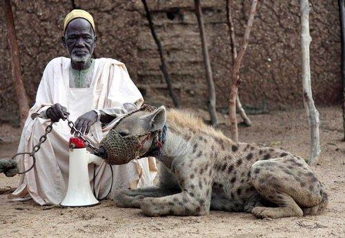 非洲護衛犬
