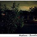 lampoo-tree-with-fireflies-amphawa-thailand+12895366642-tpfil02aw-19085.jpg