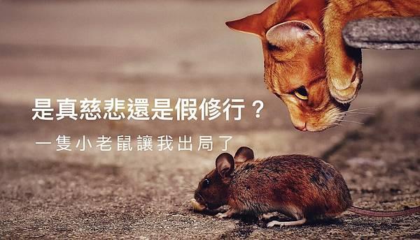 是真慈悲還是假修行?一隻小老鼠讓我出局了.jpeg