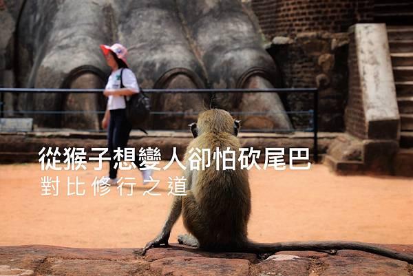 從猴子想變人卻怕砍尾巴,對比修行之道1.jpg
