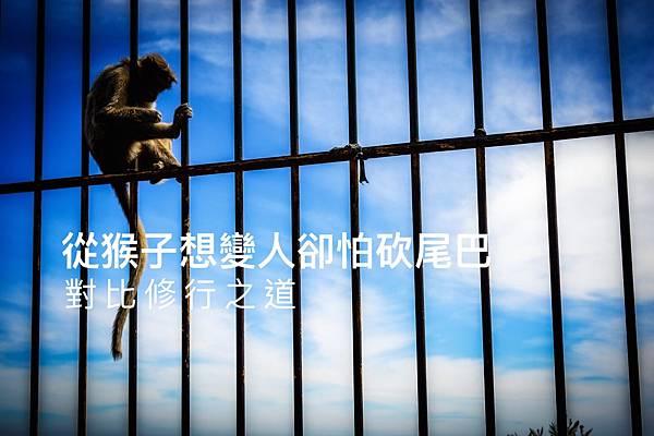 從猴子想變人卻怕砍尾巴,對比修行之道2.jpg