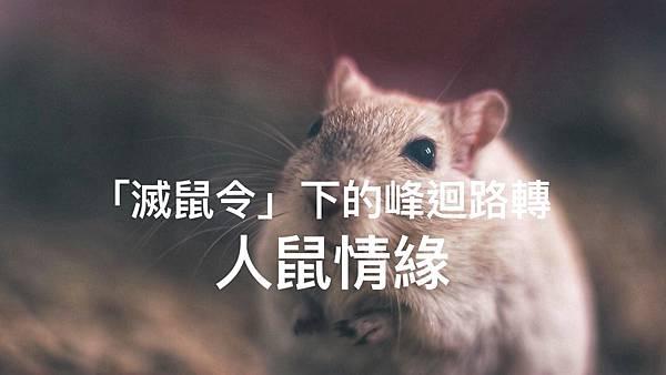 「滅鼠令」下的峰迴路轉人鼠情緣2.jpg