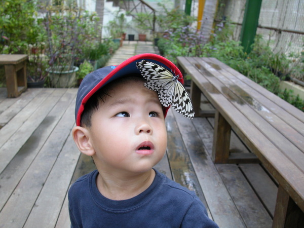 童真-蝴蝶