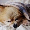 睡著了看起來好安心