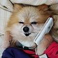 打電話給我中